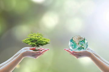 Tree planting and green earth on volunteering hands for World environment day concept. Element of the image furnished by NASA