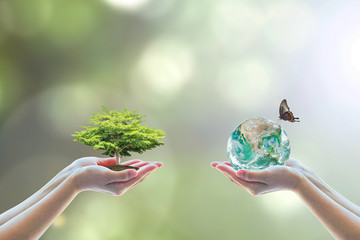 Tree planting and earth on volunteer's hands for World environment day concept. Element of this image furnished by NASA