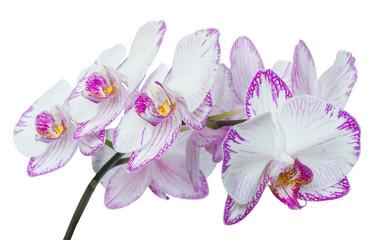 beautiful sprig of pink flowers