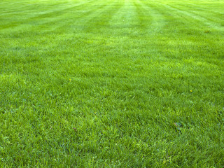 Tuinposter Gras fresh spring green grass, green grass texture or background