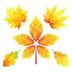 Autumn leaves. Vector illustration.