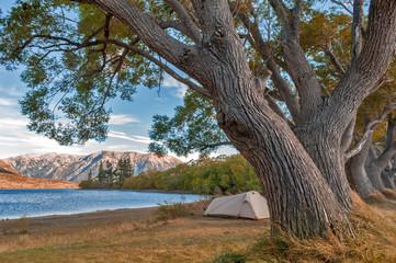 Campsite at Lake Pearson / Moana Rua Wildlife Refuge located in Craigieburn Forest Park in Canterbury region, South Island of New Zealand
