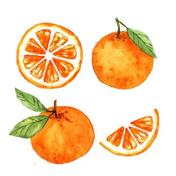 watercolor set of orange fruit and slices sketch illustration