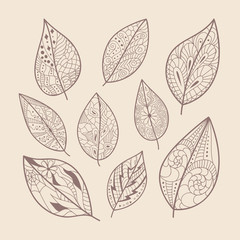 Leaves doodle