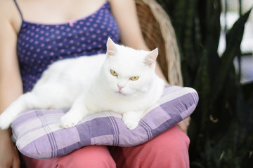 White cat lying on the pillow in a woman's lap. Selective focus.