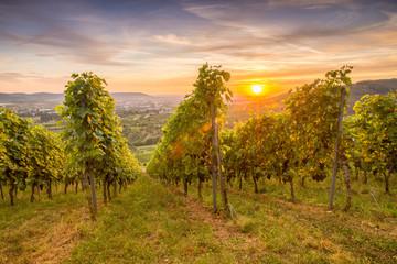 Fototapete - Sonnenuntergang im Sommer im Weinberg