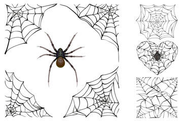 Web and poisonous spider. Set Halloween accessory