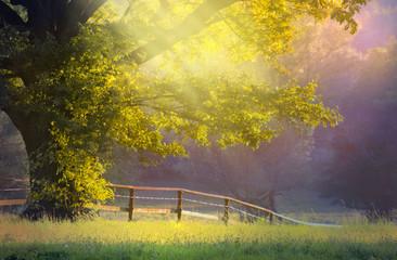 Baum mit Sonnenlicht