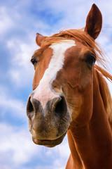 Funny brown horse - portrait.