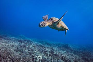 Turtle Coralscape