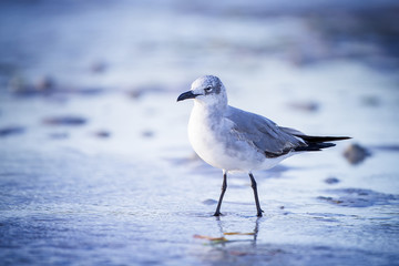A sandpiper standing in shallow water along a beach.