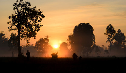 Lifestyle in the countryside, in the view the sunrise.