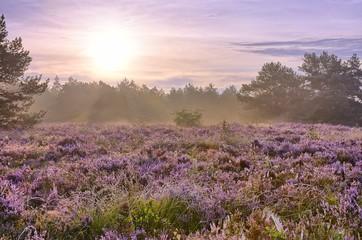 Printed kitchen splashbacks Purple Scenic image of sunrise over blooming pink moorland