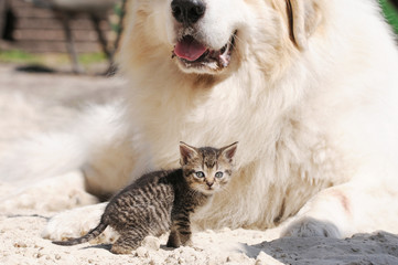 Kitten and white dog