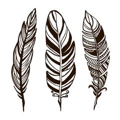 Hand drawn feathers. ink illustration art elements, boho design