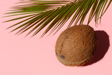 Coconut and palm tree leaf on pink background close-up. Minimal concept