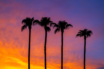 Silhouette of Four Palm Trees