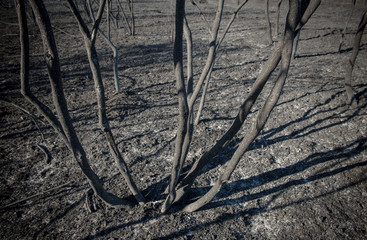 Burned shrubs and scorched earth