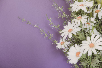 White Daisy flowers on violet wall, vintage tone, selective focus