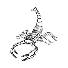 Aggressive black and white Scorpion for tattoos, zodiac sign. Made with a predominance of white. illustration