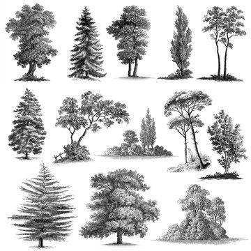 Set of 13 Hand drawn Vintage Trees