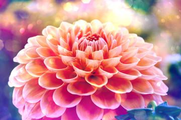 Grußkarte - Herbststimmung - Dahlienblüte abstrakter Hintergrund