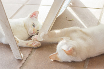 Two young white cats lying on the floor and playing.