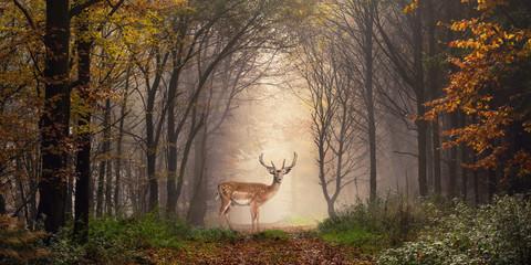 Papiers peints Bestsellers Damhirsch auf einem Weg im verträumt nebeligen Wald