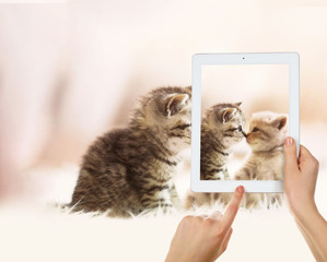 Female hands taking photo of cute kittens on tablet.