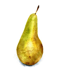 Hand drawn watercolor illustration of pear.
