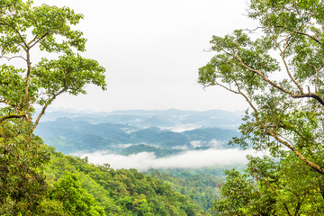 Green rain forest on mountain with mist and low cloud in morning