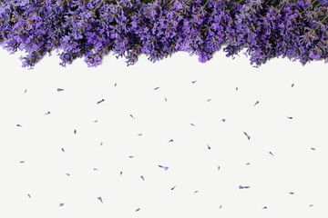 Top view of an edge formed of lavender flowers on a white background. Floral background with purple flowers of lavandula. Photo from above.