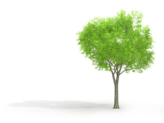 Tree isolated on a white background 3d