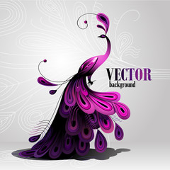 Vector background. Peacock