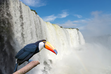 Close view of Toucan toco at the Cataratas waterfalls