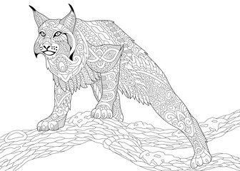 Stylized hunting wildcat (lynx, american bobcat, caracal) ready to attack, isolated on white background. Freehand sketch for adult anti stress coloring book page with doodle and zentangle elements.
