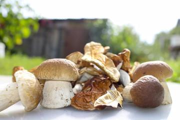 Fresh mushrooms and dried mushrooms on rustic background .Mushroom boletus. Cep boletus.