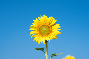 Outstanding flower