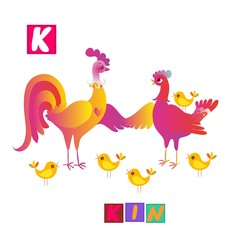 Year of the rooster. Cute cartoon english alphabet with colorful image and word. Kids vector ABC. Letter K. Kin.