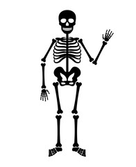 Skeleton human anatomy. Vector halloween black skeleton isolated on white