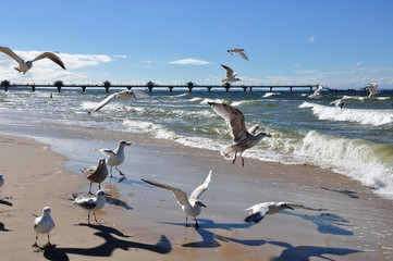 Piaszczysta plaża w Międzyzdrojach.