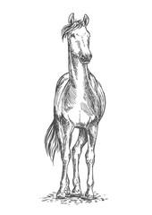 Standing horse sketch portrait