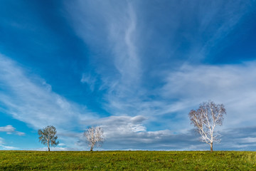 Three birch trees in the field on a background of blue sky