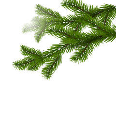 Two green spruce branches realistic. Christmas Spruce branches. Isolated on white Christmas illustration