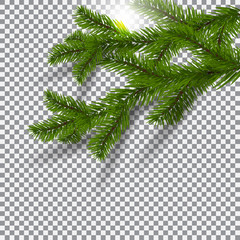 Two green, realistic shadows with spruce branches. Christmas Spruce branches. On a plaid background. The sun. Christmas illustration