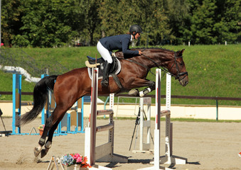 Female equestrian and brown bay horse jumping