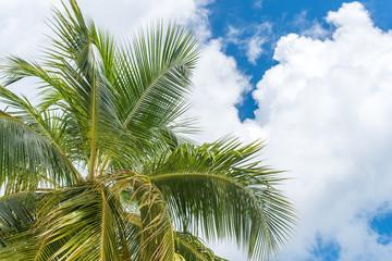 Palmen vor Wolken