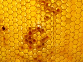 this photo shows the honey and honeycomb