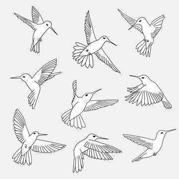 Hand drawn isolated illustration of hummingbirds