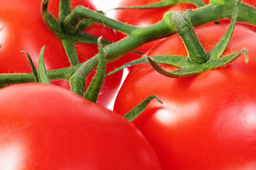 Wall Mural - bright colorful tomatoes on the gnarled branches. Macro photo.